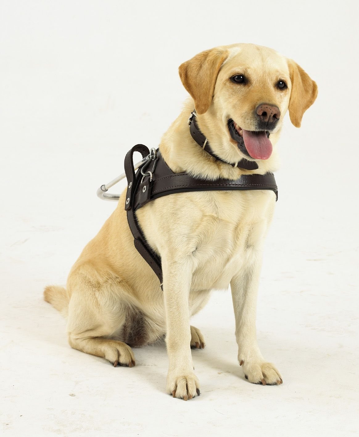 Guide Dog Training Position