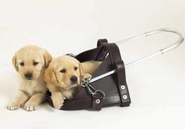 GuideDogsSAPuppiesHarness